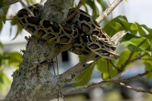 python-1136012_1920